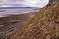 Cliff, Lindisfarne, Holy Island, Northumberland - geograph.org.uk - 1231907.jpg