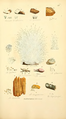 Coloured Figures of English Fungi or Mushrooms - t. 378.png
