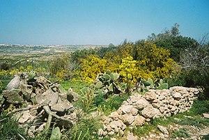 Landscape of the Comino Island Malta