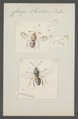Comys - Print - Iconographia Zoologica - Special Collections University of Amsterdam - UBAINV0274 046 14 0004.tif
