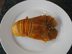 Cooked whole Moreton Bay Bug.JPG
