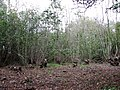 Coppicing in progress - geograph.org.uk - 607146.jpg