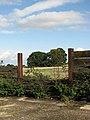 Copse in field - geograph.org.uk - 989937.jpg