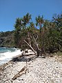 Coral Beach, Conway National Park.jpg
