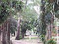 Cordillera Department, Paraguay - panoramio (3).jpg