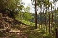 Cordillera central - Costado occidental - Municipio de Génova (Quindío) (15322436708).jpg