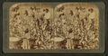 Cotton is king - A plantation scene, Georgia, by Underwood & Underwood 2.png