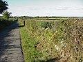 Country Road near Urishay - geograph.org.uk - 85994.jpg