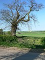 Countryside near Gumley, Leicestershire - geograph.org.uk - 417973.jpg