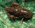 Crayfish UMFS 2014 1.JPG