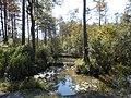 Creek Flowing in Alabama Field.jpg