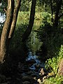Creek inlet at Ivacsi Lake, Veresegyház, HU - panoramio (1).jpg