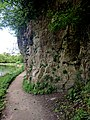 Creswell Gorge, Creswell Craggs, Notts (127).jpg