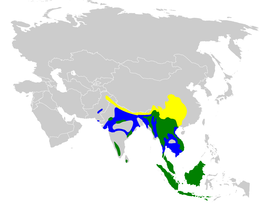Culicicapa ceylonensis distribution map.png