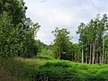 Cut line, Garshelloch Woods. - geograph.org.uk - 9919.jpg