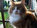 Cute Cat (2230537937).jpg