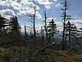 Czarna Góra peak.jpg
