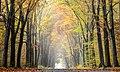 Dülmen, Börnste, Waldweg -- 2015 -- 4649 color balanced.jpg