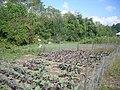 D-Town Farm Sept 2011 07.jpg