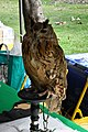 D85 1777 Siberian Eagle Owl Photographed by Trisorn Triboon.jpg