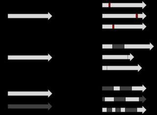 Mutagenesis (molecular biology technique)