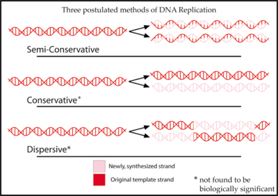 An Introduction to Molecular Biology/Replication of DNA and its ...