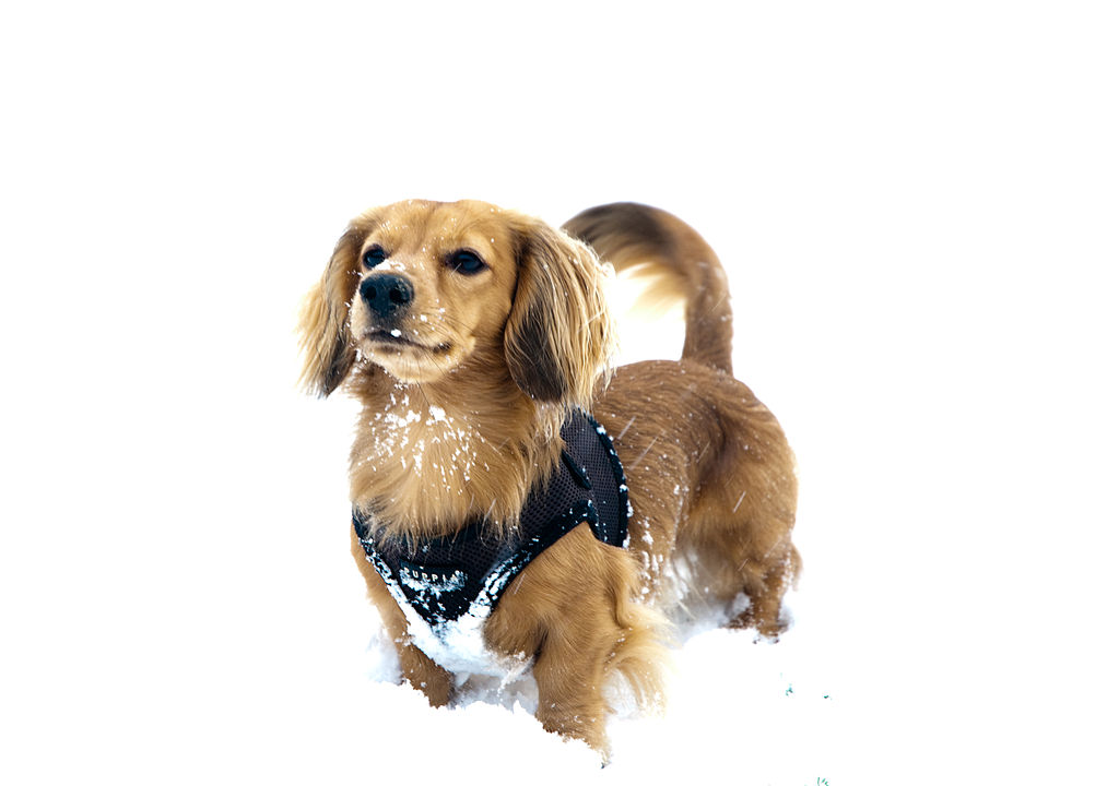 Image Result For Harness Your Dog