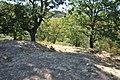 Dacian Fortress of Capalna 039.jpg