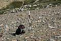 Dana Plateau Plot 004 (11879511986).jpg