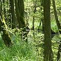Darsserwald.jpg