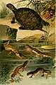 Deutschlands Amphibien und Reptilien (1890) (20895732201).jpg