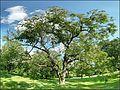 Diófás panoráma - panoramio.jpg