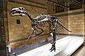 Dinosaur bones (40027399731).jpg