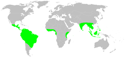 Distribution.gymnophiona.1.png