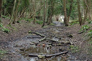 Welsh Bicknor - The former Ross and Monmouth Railway trackbed in Welsh Bicknor