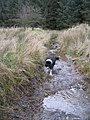 Dog Beck ^^ - geograph.org.uk - 631265.jpg