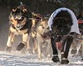 Dogs run by Mike Williams (8529502503).jpg