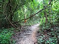Doi Suthep Monk Trail 2.jpg