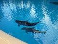 Dolphins (7981099958).jpg