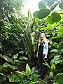 Dracaena bushii Damen.jpg