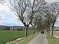 Drive to Cordon - geograph.org.uk - 157462.jpg