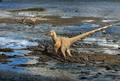Dromaeosaur IVPP V22530.png