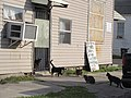 Dryades Sunday Morning NOLA Feb 2017 Cats and Sign B.jpg