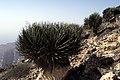 Dunst Oman scan0341 - Struwwelpeter.jpg
