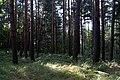 Duny u Sváravy (04).JPG