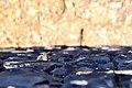 Eidechse im Loch zwischen Mauersteinen in Agulo auf La Gomera, Spanien (48293665201).jpg