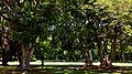 El Salvador - San Salvador, Corinto Golf Club - panoramio - randreu (4).jpg
