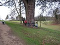 Encircling a large Cedar tree at Stowe Gardens - geograph.org.uk - 643847.jpg