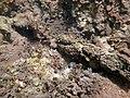 Encroutement algal et ou bactérien sur plantes aquatiques aout 2016 Sèvre niortaise F.Lamiot 08.jpg