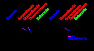 Origin Of Eukaryotesedit